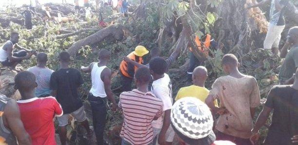 Goudomp : L'effondrement d'un baobab fait plusieurs blessées