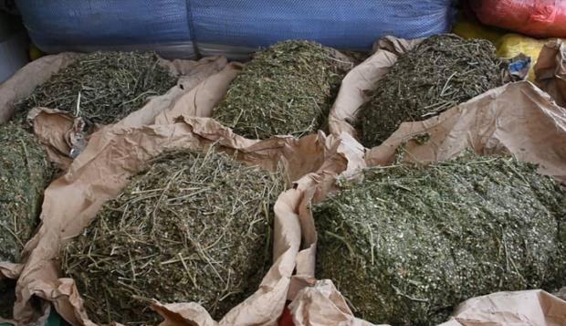 Diourbel – Trafic de drogue : Djibril Fall prend 10 ans ferme