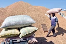 Les producteurs d' arachide de Touba dénoncent la concurrence déloyale des chinois